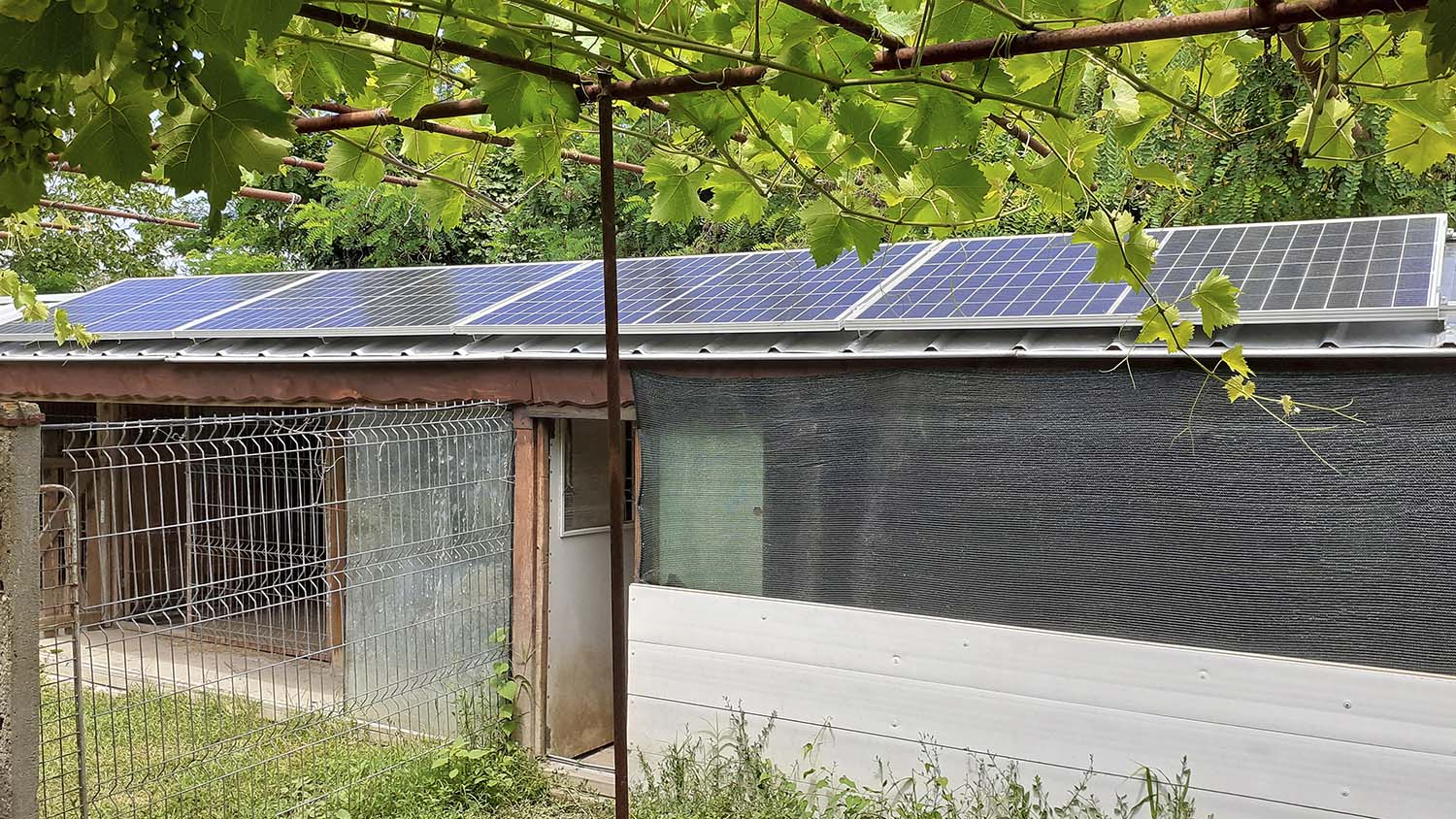 Solar modules on the roof of the aviary
