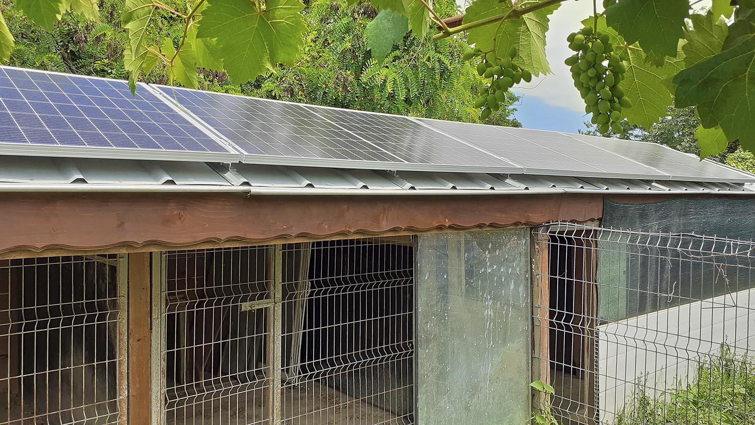 Photovoltaic modules for the kennel